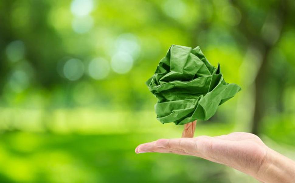Artigo Two Sides América do Norte discute: eliminar o papel é melhor para o meio ambiente?